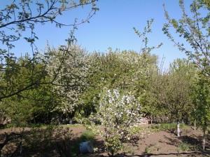 Munci agricole în ajun de Paști; fotografiile mele; diverse; Chișinău; 29.04.2013; publicat de Bot Eugen. 05.05.2013; 05:44