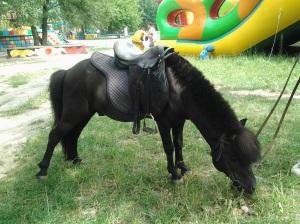 Poze cu ponei; fotografiile mele; Chişinău; 27.07.2013; 20:49; publicat de Bot Eugen.