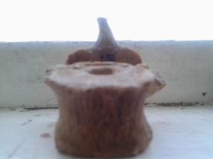 O vertebră dorsală; fotografiile mele; diverse; din anticariatul cu obiecte din altă epocă; Chișinău; 23.03.2014; 18:38; publicat de Bot Eugen.